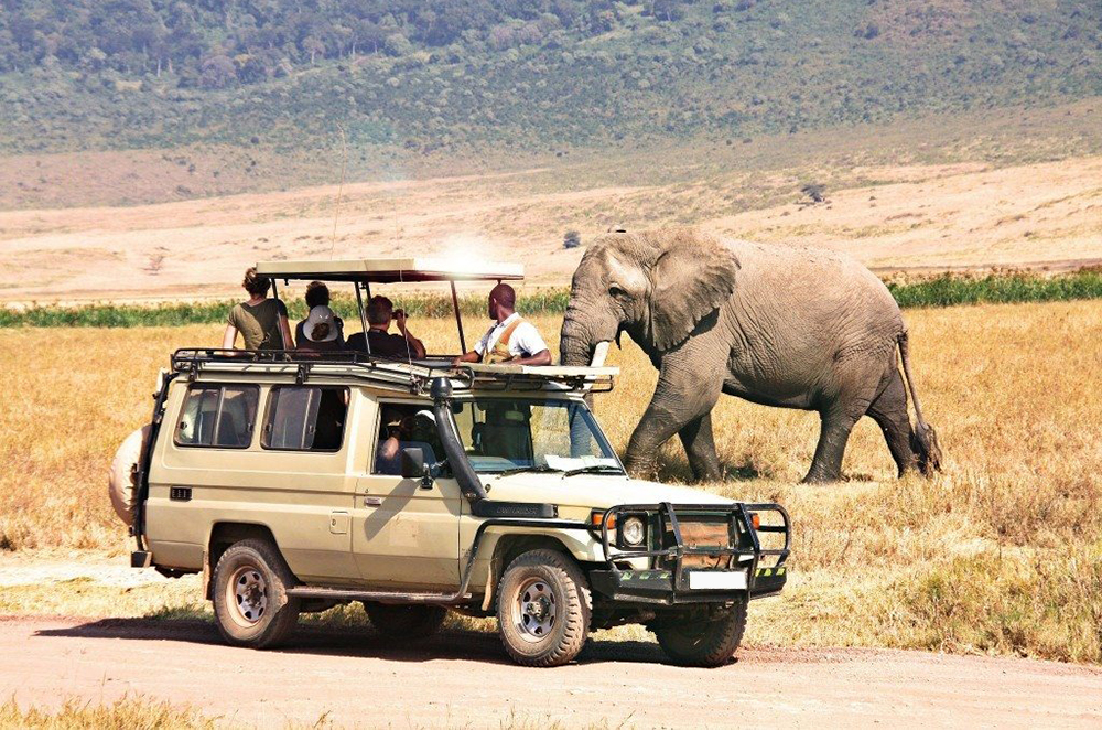 Excellent Safari Drive